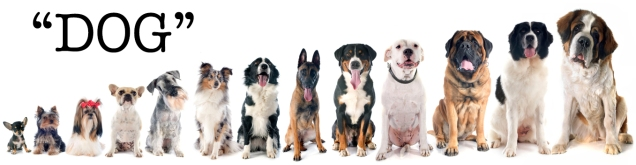 group of dogs in front of white background