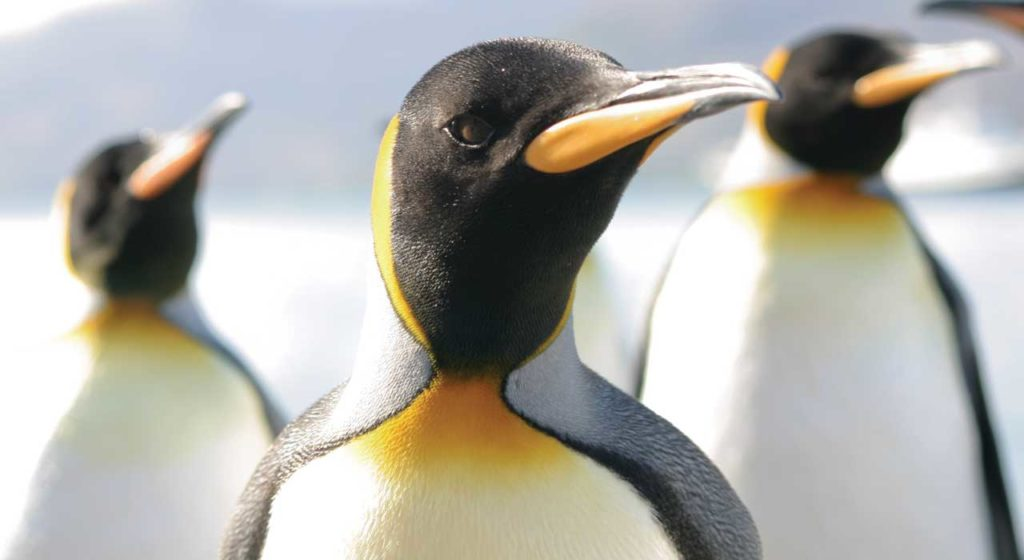 penguin-1024x560-1